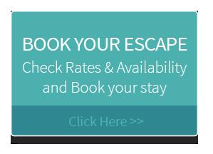 Escape at Nobbys - Port Macquarie